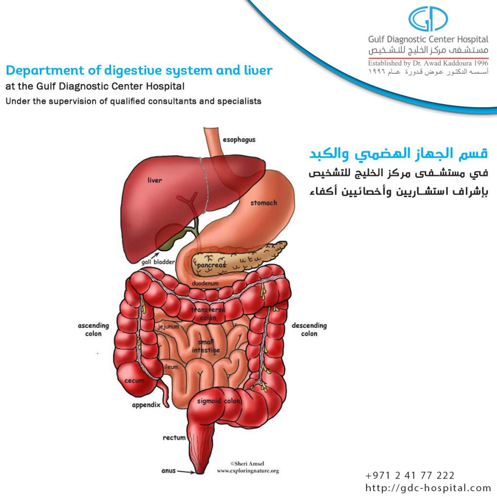 Digestive diseases & Hepatology Department, State of Art Services at Gulf Diagnostic Center Hospital provides